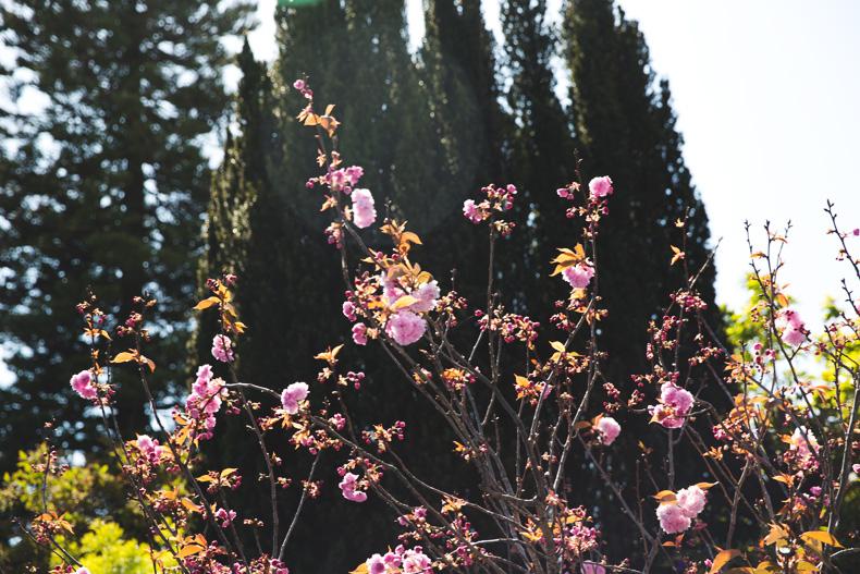San_Francisco-Road_Trip_California-Fringe_Jacket-Suede-Floral_Skirt-outfit-17