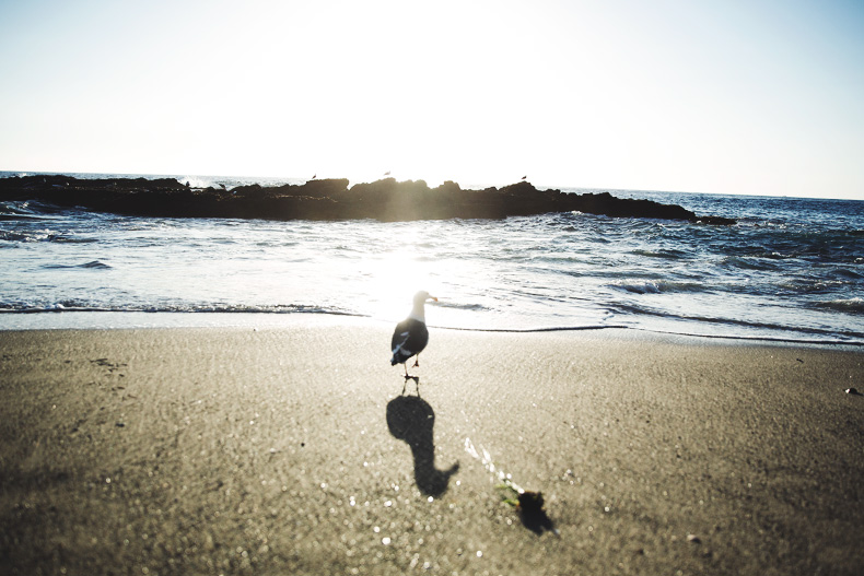 Laguna_Beach-Orange_County-Open_Back_Dress-Floral_Print-Faithfulthebrand-Beach-32