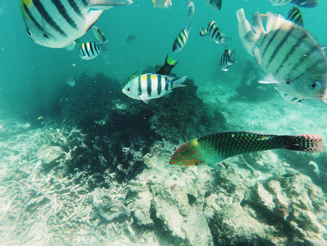Snorkel-Thailand-CollageOntheRoad-32