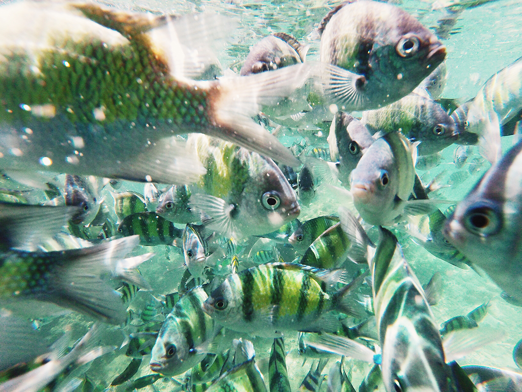 Snorkel-Thailand-CollageOntheRoad-34