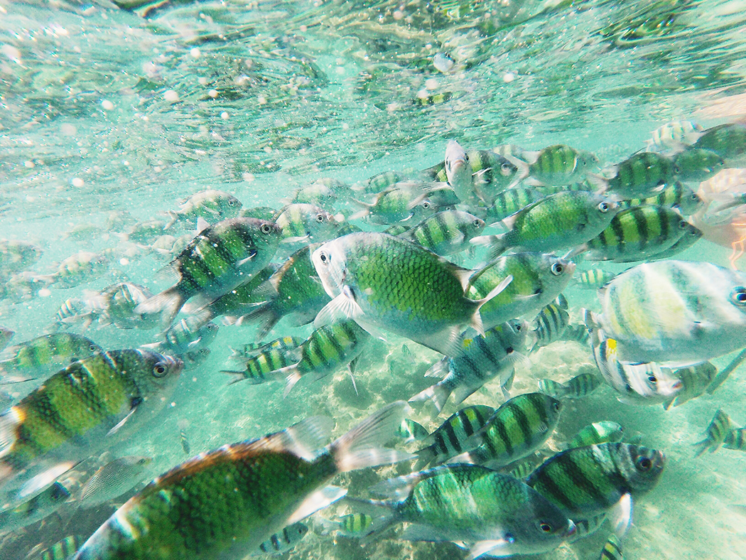 Snorkel-Thailand-CollageOntheRoad-37